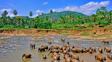 Rundreise – Faszinierendes Sri Lanka