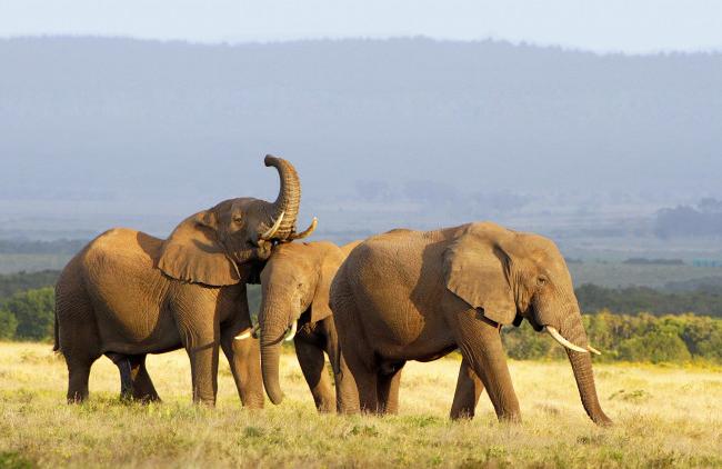 Afrika erleben mit AIDAmira